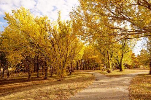 daun kuning di australia